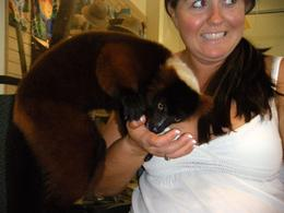 Jungle Island, Miami: The lemur was getting really cuddly and was not afraid at all - June 2009