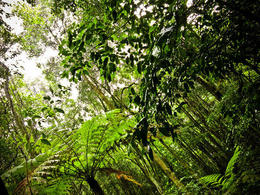 Photo of Sydney Blue Mountains Nature and Wildlife Day Tour from Sydney Rainforest area on the Blue Mountains Tour