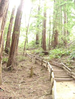 Just a small part of the beautiful Muir Woods. - September 2009