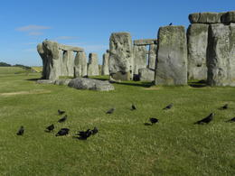 Photo of London London to Stonehenge Shuttle Bus & Independent Day Trip Stonehenge birds