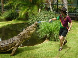 Croc feeding , Janice W - January 2015