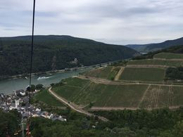 What a view of the castles, Rhine, and vineyards! , buddy.bland - August 2015
