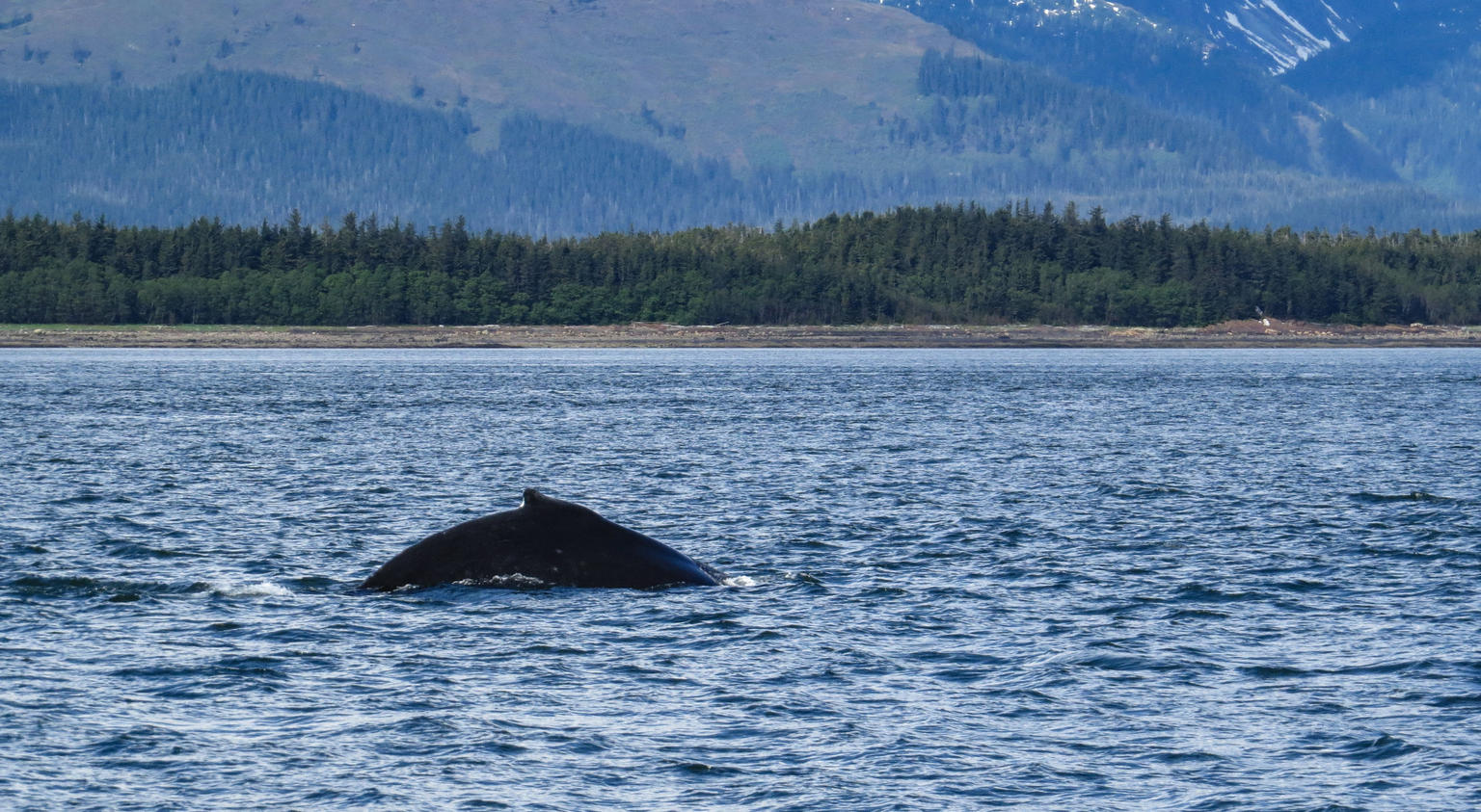 Whale Watch and Mendenhall Glacier Combo Tour