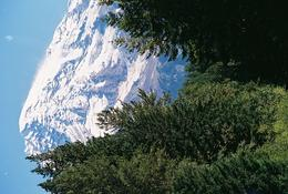 Best picture ( and 1st picture I took of Mt. Ranier) , Donna M P - September 2013