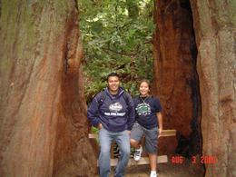 Photo of San Francisco Muir Woods, Giant Redwoods and Sausalito Half-Day Trip Muir Woods