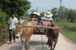 Photo of Bangkok Khao Yai National Park and Elephant Ride Day Trip from Bangkok Ox Cart Ride