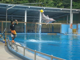 The Dolphin kicked to ball. , BHAVIN S - September 2012