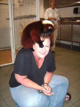 Photo of Miami Jungle Island Miami Lemur changing my hair-do!