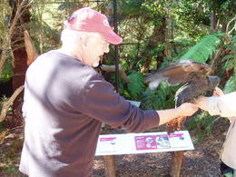 Healesville Wildlife Sanctuary with a tour volunteer advocate to answer all your questions. , BUD - April 2012