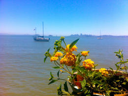 Photo of San Francisco Muir Woods and Sausalito Tour plus Bay Cruise Sausalito