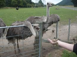 Photo of Auckland Waitomo Caves and Rotorua Day Trip from Auckland The ever curious ostrich