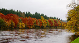 The River Tay in late October, right next to the Dunkeld Cathedral , Scott R - November 2015