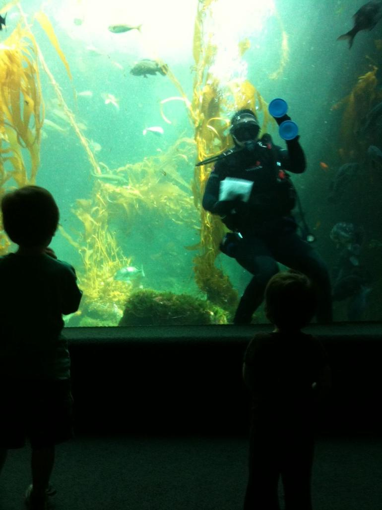Birch Aquarium - Diver in Kelp Forest - San Diego