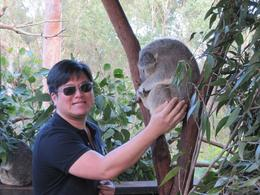 Photo of Sydney Port Stephens Day Trip with Dolphin Watching, Sandboarding and Australian Wildlife Cute koala