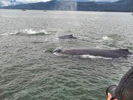 Whale tour with Juneau Whale Watching Tours. , kirk.heflin - July 2014