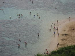 People snorkeling in the crystal clear waters at Hanauma Bay., Bandit - February 2011