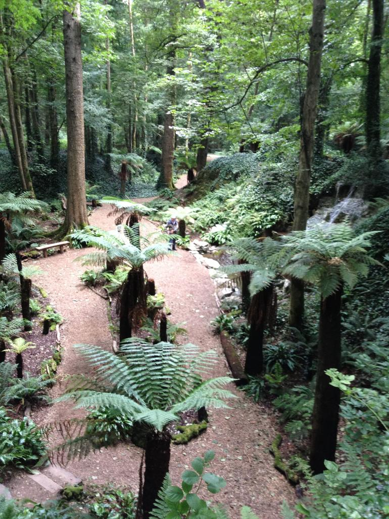 The Fern Garden at Blarney Castle - Dublin