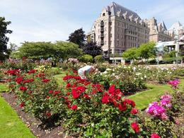 Photo of   Victoria - Empress Rose Garden