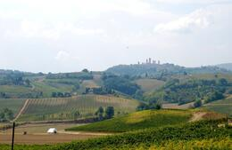 Photo of Florence Tuscany in One Day Sightseeing Tour Vineyard