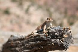 Photo of Las Vegas Small-Group Death Valley National Park Day Trip from Las Vegas cute!