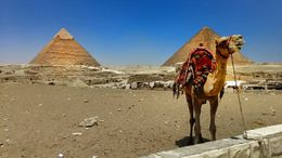 Cameron the Camel posing in front of the 5000 year old Giza Pyramids. , Felipe B - May 2016