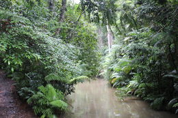 One of many great views of the Kuranda rainforest taken during the excursion , Kathleen Z - August 2015