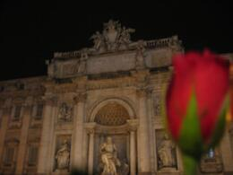 Photo of   A rose at Trevi Fountain