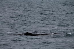 Photo of   In pursue of a whale, maybe a baby whale.