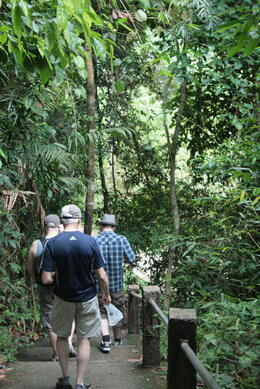Walking back through the jungle after our trek to the waterfall , Rodney H - June 2011