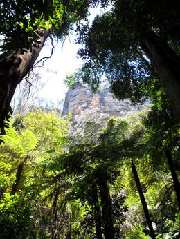 Photo of Sydney Blue Mountains Nature and Wildlife Day Tour from Sydney SAM_5288