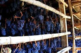 Grapes - February 2010