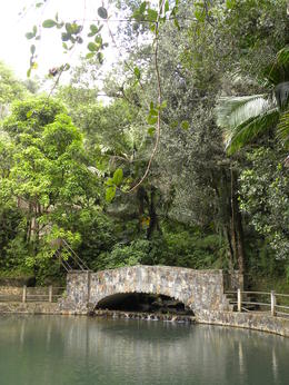Photo of San Juan El Yunque Rainforest Half-Day Trip from San Juan A view at the Bano Grande
