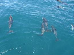 Along the Kaikoura coastline were a pod of dolphins which delighted in entertaining us., Julie Ann G - January 2010
