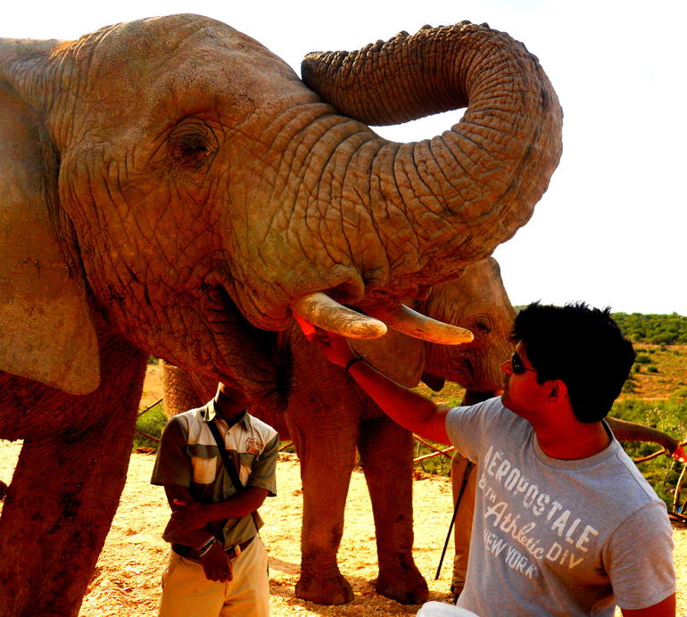 Elephant Feeding Time - Cape Town