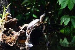 Photo of San Jose Tortuguero National Park turtle