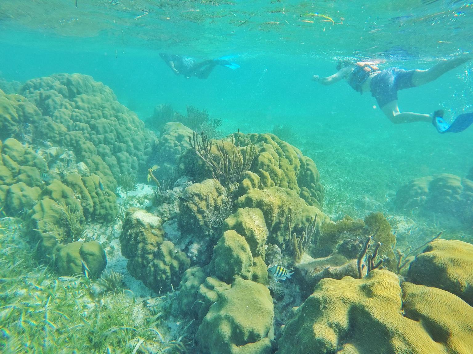 Snorkel Tour in Puerto Morelos from Cancun