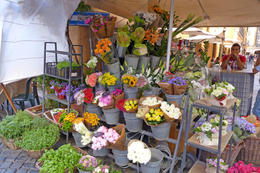 A flower market outside Antica Enteca , Dolores M - May 2013