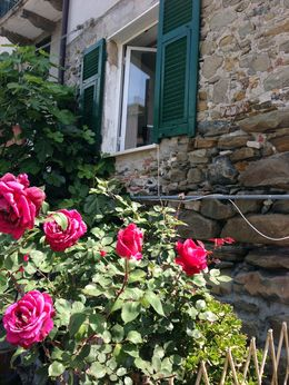 Starting out on our journey through Cinque Terre. Beautiful roses everywhere. , Valerie T - August 2015