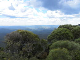 Photo of Sydney Blue Mountains Nature and Wildlife Day Tour from Sydney SAM_5324