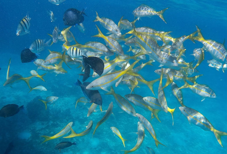 Feeding the fish at the second snorkeling site. Purchasing fish food is optional, but definitely worth the 4