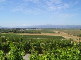 Photo of San Francisco Napa and Sonoma Wine Country Tour A Great View