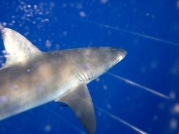 Photo of Oahu Oahu Shark Dive Close Encounters