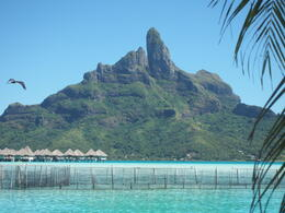 Photo of Bora Bora Bora Bora Snorkel, Sharkfeeding and Lagoonarium Full-Day Tour including Picnic Lunch Lagoonarium