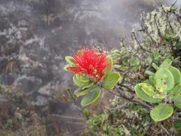 Photo of Big Island of Hawaii Kilauea Volcano Bike Tour Lehua Blossom