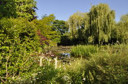 When we first arrived in Monet's Garden we were able to take a beautiful picture of the gardens. , Scott R - June 2015