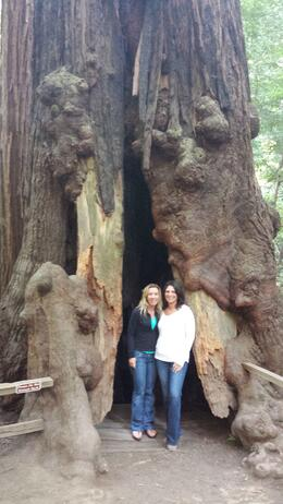 Photo of San Francisco San Francisco Super Saver: Muir Woods and Wine Country Tour Muir Woods!