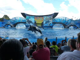 Photo of Orlando SeaWorld® Orlando Ticket Show