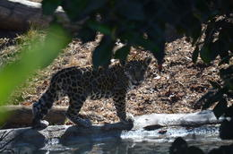 Photo of San Diego San Diego Zoo Baby Jag