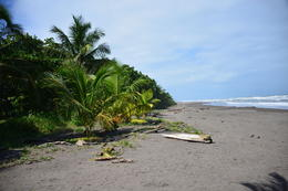 Photo of San Jose Tortuguero National Park beach