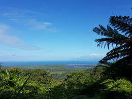 View point at Daintree Rainforest , Ekta R - June 2016